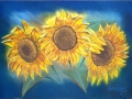 Susans Sunflowers